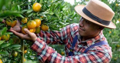 ¿Porqué apoyamos al campesino Colombiano?